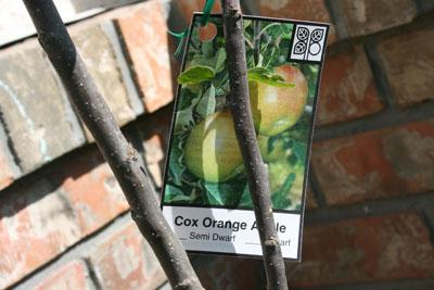 Apple-tree-tag