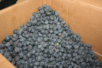Blueberries-in-box