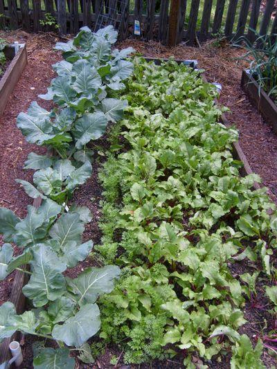 Ambers garden2