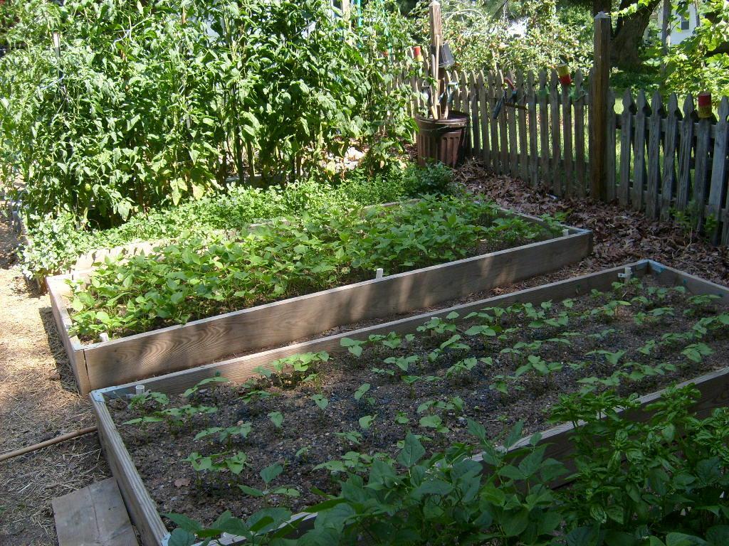 Ambers garden4