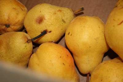 Ripe-pears